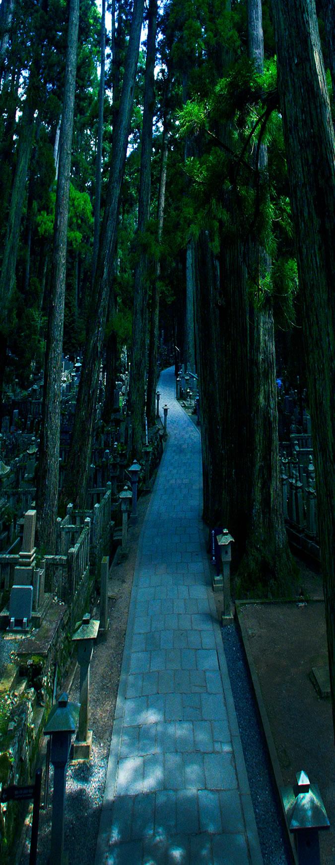 総本山金剛峯寺 高野山中之橋霊園|霊峰・高野山に抱かれた永遠の聖地